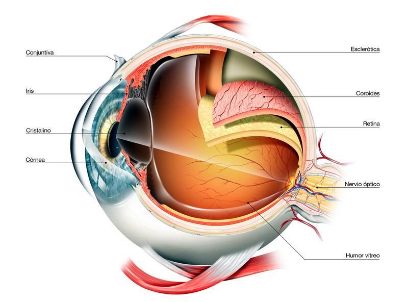 Anatomía del ojo, una cámara perfecta.   Clínica Pasteur